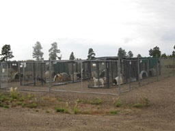 Temporary Outside Kennels